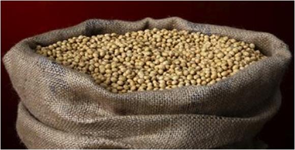 Soya Beans